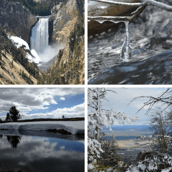 Yellowstone in Spring   What to Expect