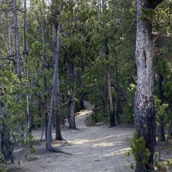 4 Things to Remember When You Hike in YNP